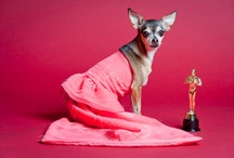 John Chapple Photography / by Prestigious Puppy
