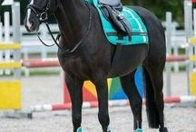 English tack / Cute english tack for horses and ponies :)