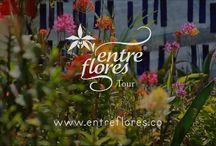 Videos sobre orquídeas / Te invitamos para que nos acompañes en este viaje de conocimientos, de la mano de Daniel Piedrahita expositor de orquídeas de alta calidad y gerente de Entre Flores tour, esperamos tus sugerencias, opiniones e inquietudes para que entre todos los que conformamos esta comunidad creciente aportemos a este gran hobby de las orquídeas.