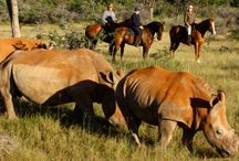 Africa Travel Guide / Africa is known for its wilderness and wilderness varies by different sections of Africa.