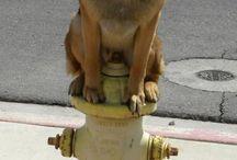 PetPet Funny / Foto divertenti, gag, cani, gatti