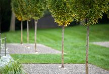 Trær til hagen
