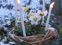 Imbolc / January 31st - February 1st: A purifying and blessing celebration of the coming light.