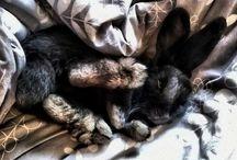 My Bunny, Izabella