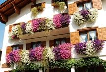 Austrian house