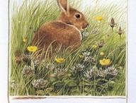 I love rabbits / Adoro i conigli