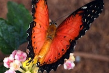 Butterflies / by Stephanie W.