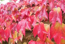 Autumn / What does Autumn mean to you and how does it look and feel..