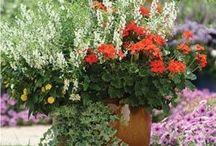 Tuinieren in potten... De blommetjes