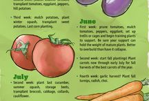 Vegetable guidance