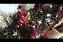 Presepi in Friuli Venezia Giulia Natale