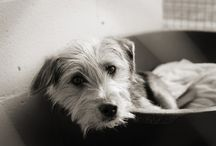 Senior Dog Health and Care / Articles about senior dogs with a focus on their health and care.