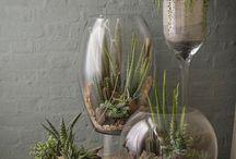 Plantas no vidro