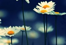 Çiçeklerimm
