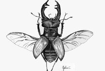 insects and botanicals