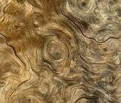 Wood grain / Wood grain, including how wood grows.
