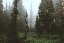 Wild and melancholic