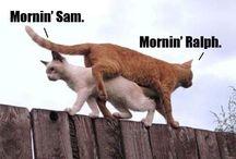 Funny / #humor #funny