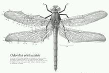 Scientific Drawing - Invertebrados