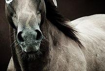 Horse creatives