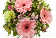 Flowers / Beautiful flowers for your relatives and friends