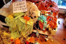Pet shaming