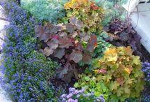 Hageplanter/blomster