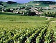 Wine & Viticulture..
