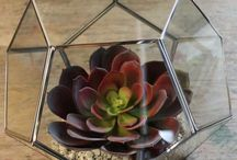 Artificial Succulents in Pots / Bespoke Service supplying Artificial Succulents in an Eclectic Range of Pots