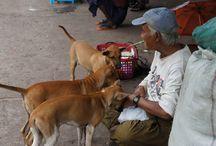 Life in Myanmar / A board dedicated to the wonderful people of Myanmar