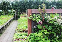 Vertiplant tuin ideeen / Tuin ideeen verticaal tuinieren
