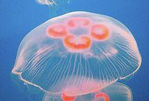 jellyfish ispiration