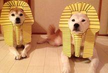 Puppy&Kitty