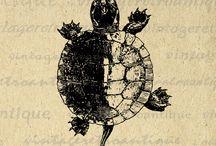 turtle jinki
