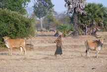 Cambodian wildlife / Animal lover ? Come and discover Cambodia's wildlife with us!