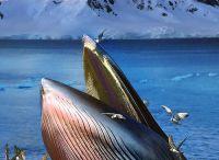 Szuper tengeri állat képek