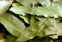 Bylinky bobkový list