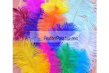COLORFUL OSTRICH FEATHER / by Feather Paradise