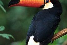 Poly Island Fauna