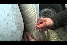 Horse top tips