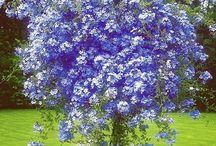 ogrod,drzewko kwiatowe