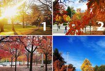#InstaWSU Fall 2016 Photo Contest