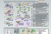 Cancer Posters / Detailed cancer research posters for Acute Myeloid Leukemia and Melanoma.