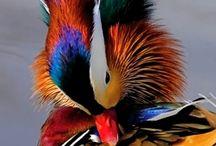Bijzonder vogels