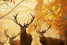 Deers and autumn leaves.