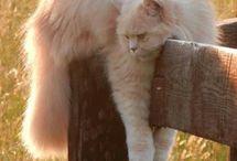 Katt  - avlappet