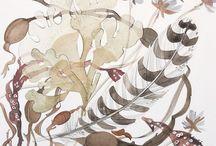 Seaweed and seashore life