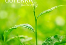 Natural oils to buy