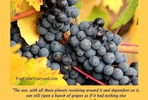 Harvest Time / Recipes and images that reflect harvest in wine country
