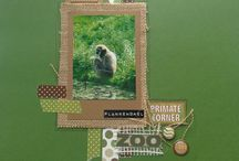 "Kit de scrap ""Safari"" / Feuilles Bo Bunny de la collection Safari"